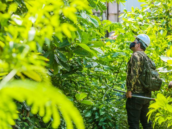 Prosamim realiza resgate da fauna na área de intervenção no igarapé Mestre Chico